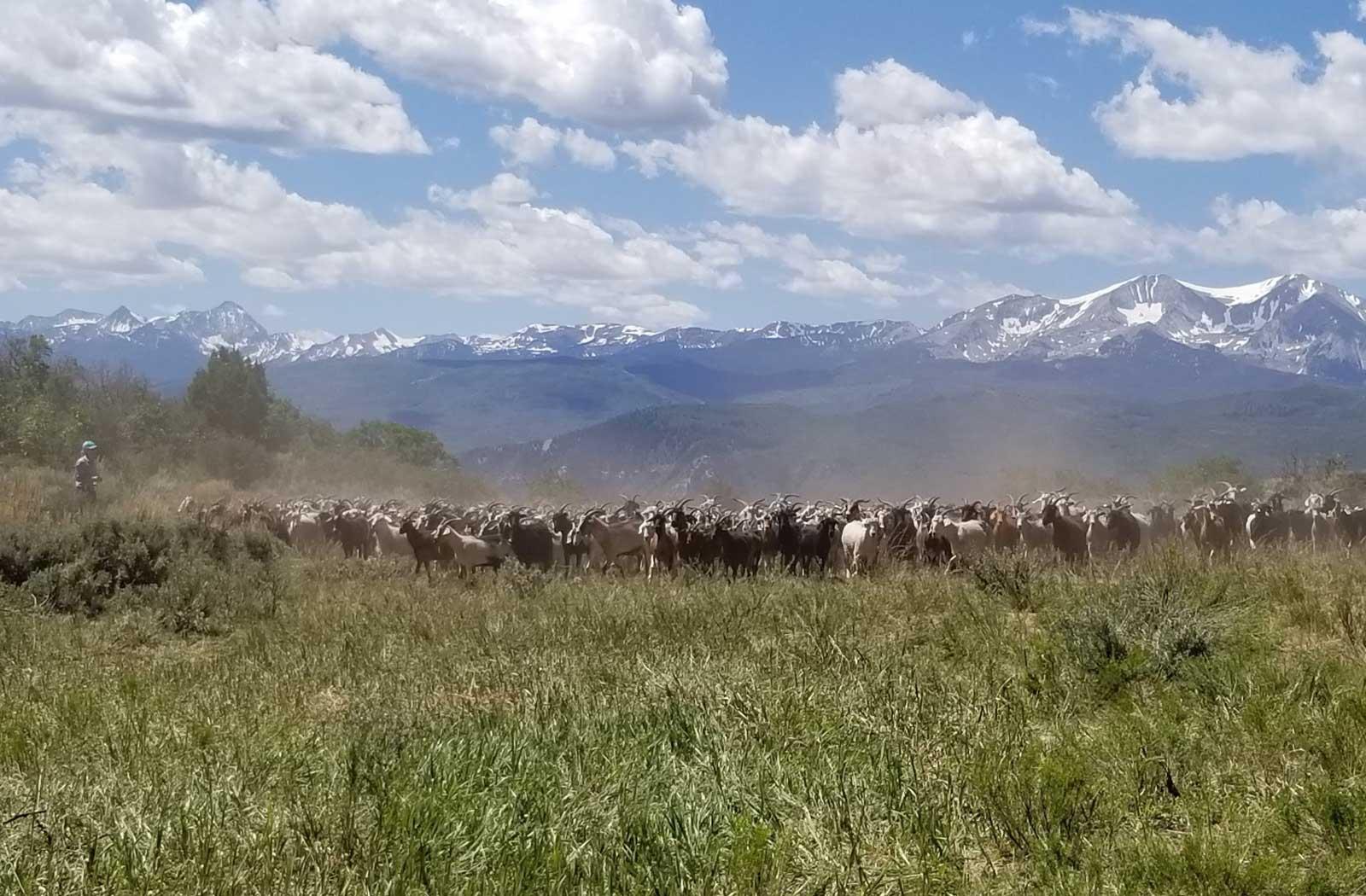 Goatapelli Foundation